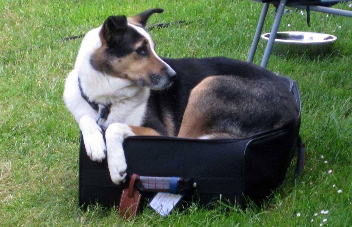 Rasselhunde: BARF Shop im Winzerdorf Albig