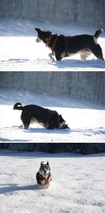 zufriedener Rasselhunde Kunde Oskar