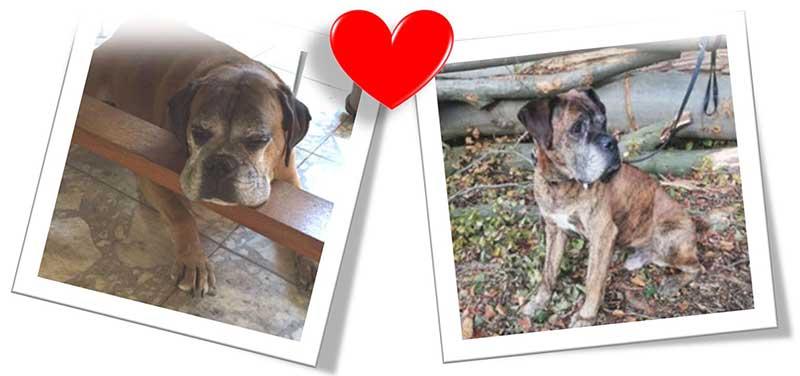 Rasselhunde Wechselgeld Spendenaktion Boxer Nothilfe 2