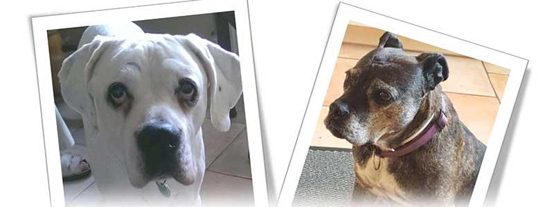 Rasselhunde Wechselgeld Spendenaktion Boxer Nothilfe 1