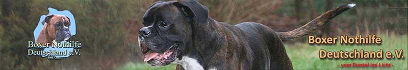 Rasselhunde Wechselgeld Spendenaktion Boxer Nothilfe Verein