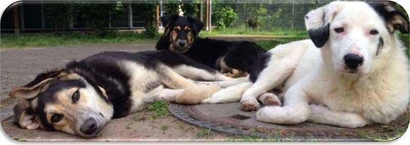Rasselhunde Wechselgeld Spendenaktion Jede Pfote zählt