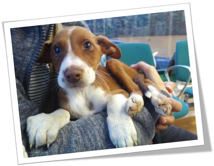 Rasselhunde Wechselgeld Spendenaktion Helft Handeln