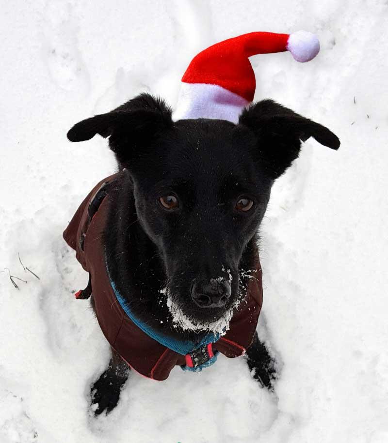 Rasselhunde Weihnachtsgrüße