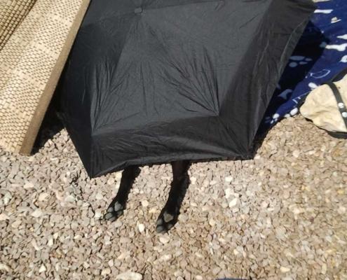 Nicky unterm Sonnenschirm klein